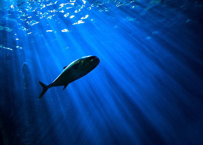A fish swims in a deep and dark tank lit from above